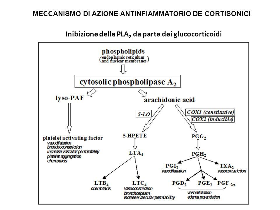 Inibizione della PLA2 da parte dei glucocorticoidi