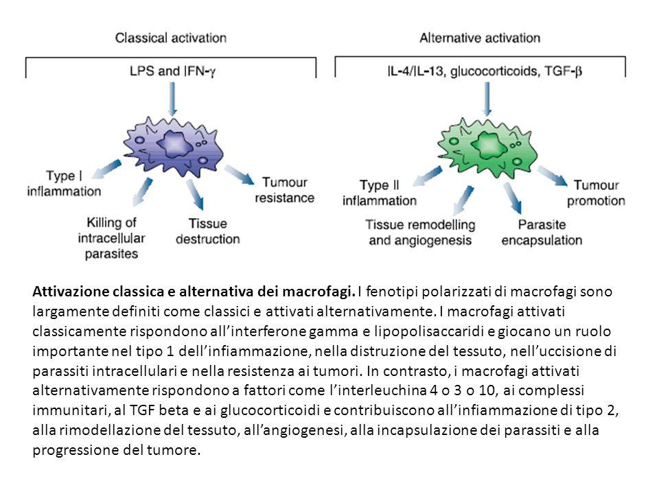 Attivazione classica e alternativa dei macrofagi