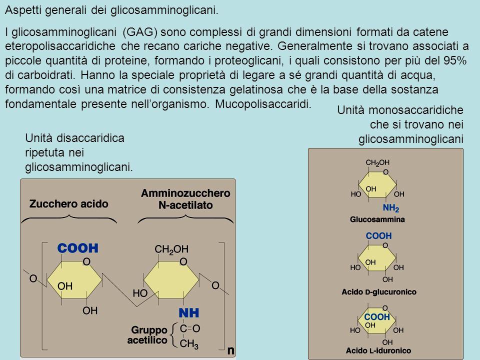 Aspetti generali dei glicosamminoglicani.