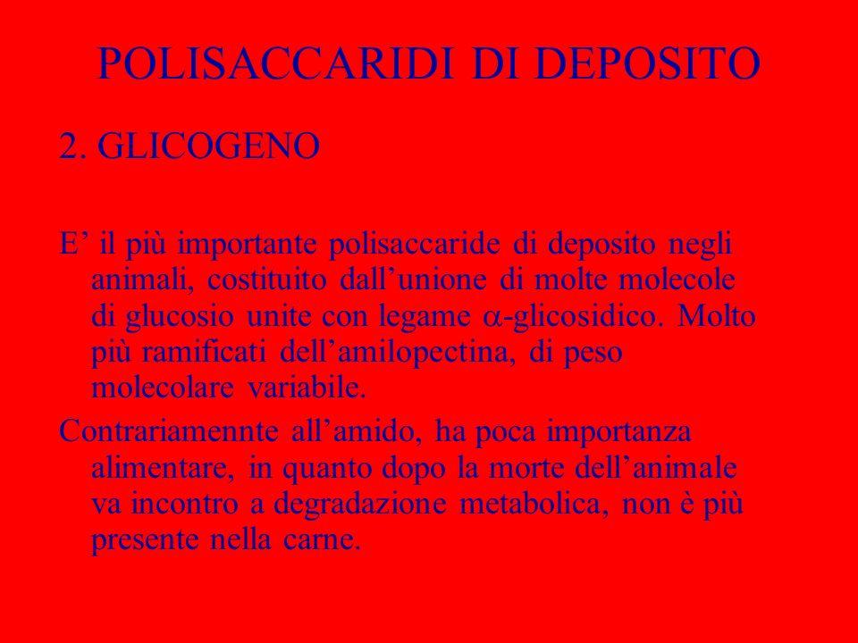 POLISACCARIDI DI DEPOSITO