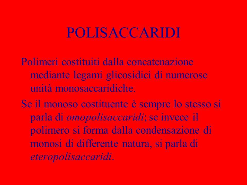 POLISACCARIDI Polimeri costituiti dalla concatenazione mediante legami glicosidici di numerose unità monosaccaridiche.