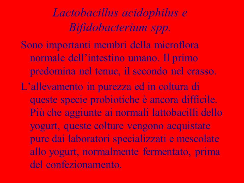 Lactobacillus acidophilus e Bifidobacterium spp.