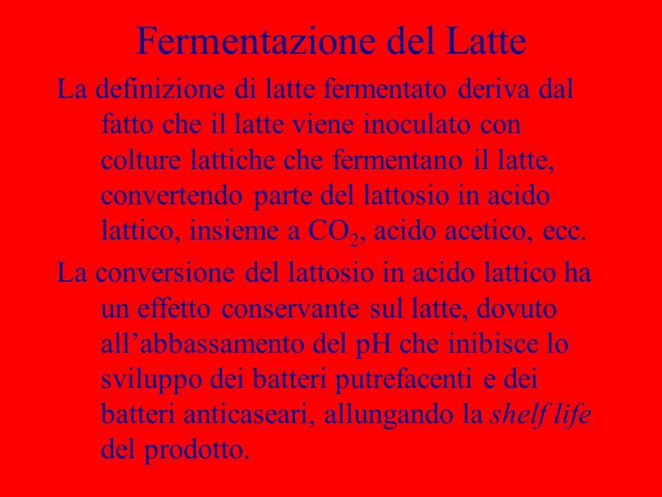 Fermentazione del Latte