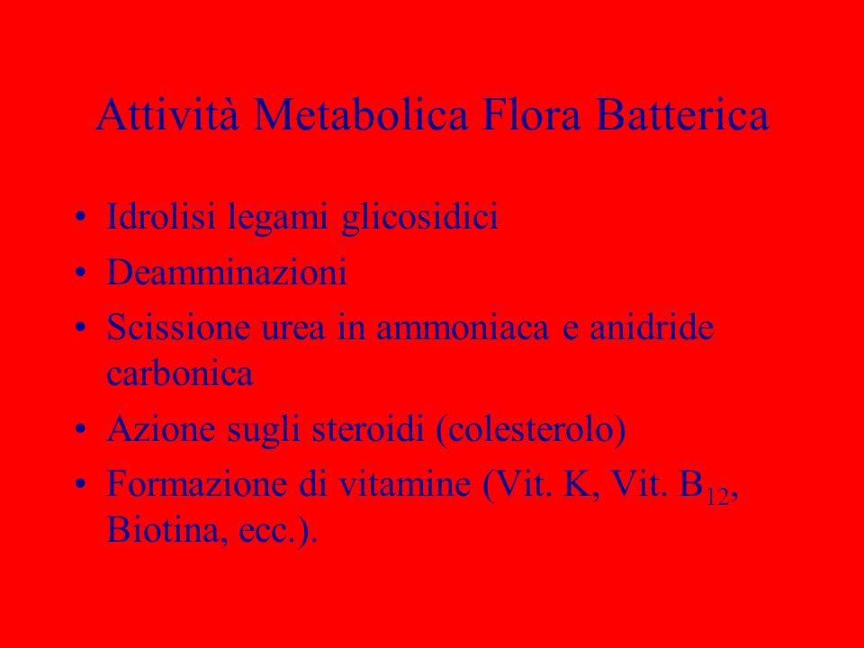 Attività Metabolica Flora Batterica