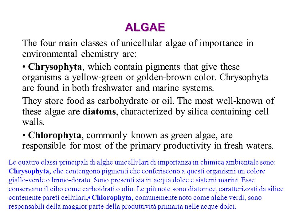 ALGAE The four main classes of unicellular algae of importance in environmental chemistry are: