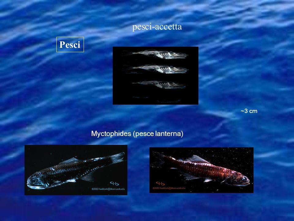 Myctophides (pesce lanterna)