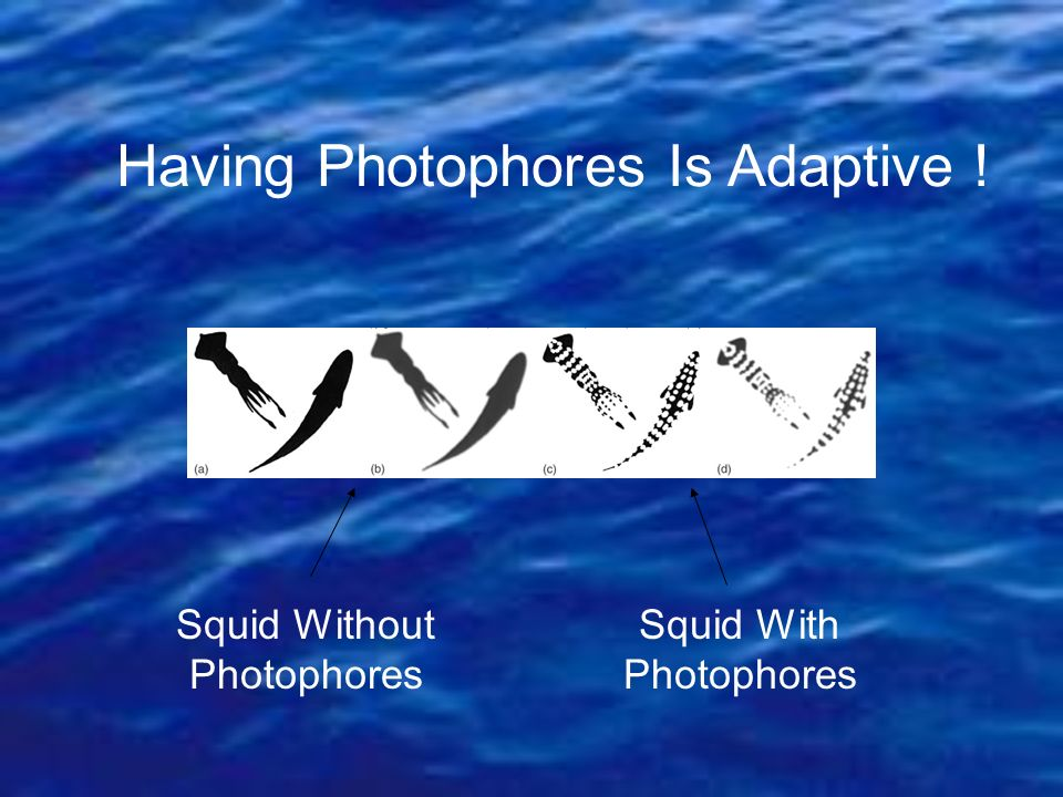 Having Photophores Is Adaptive !