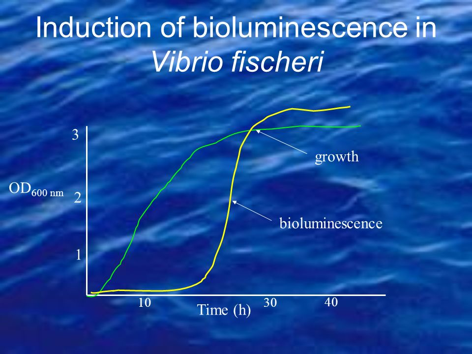 Induction of bioluminescence in Vibrio fischeri