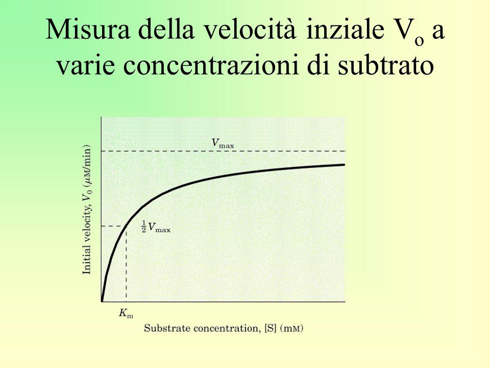 Misura della velocità inziale Vo a varie concentrazioni di subtrato