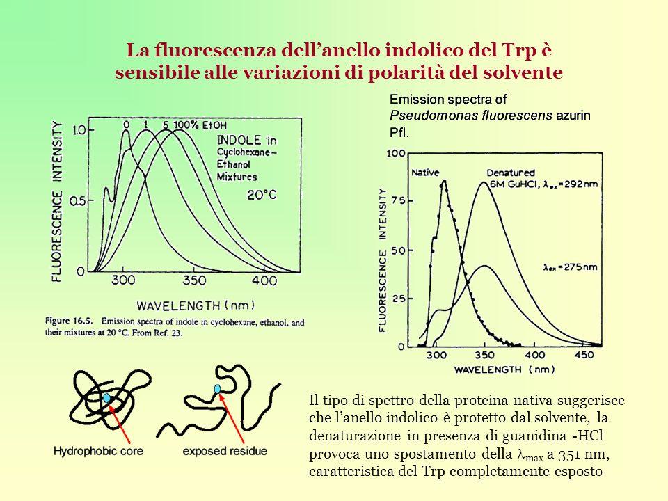 La fluorescenza dell'anello indolico del Trp è sensibile alle variazioni di polarità del solvente