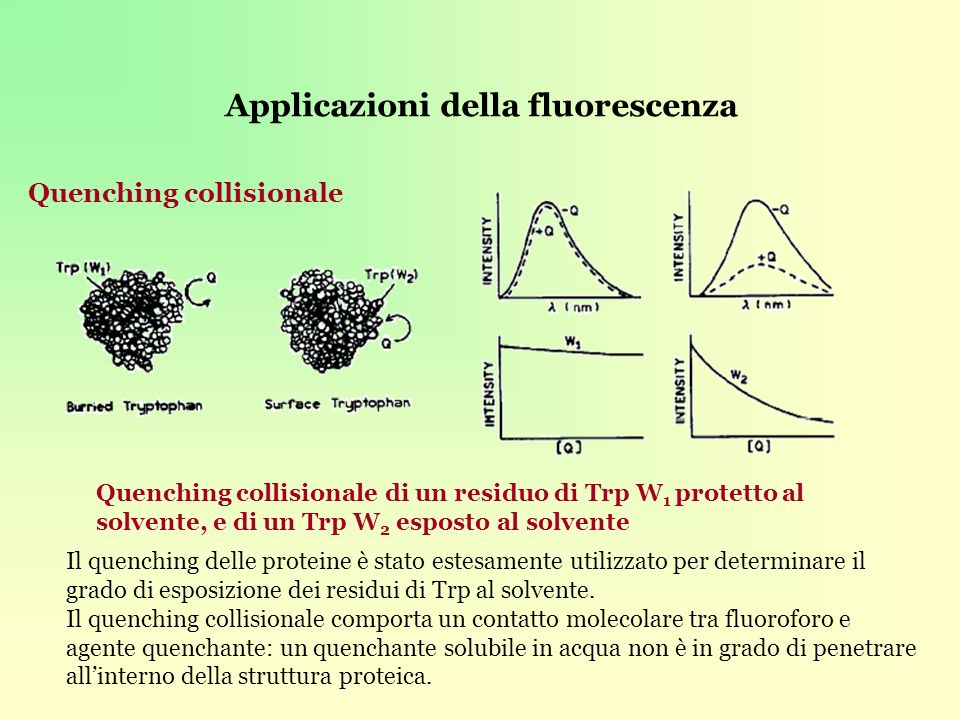 Applicazioni della fluorescenza Quenching collisionale