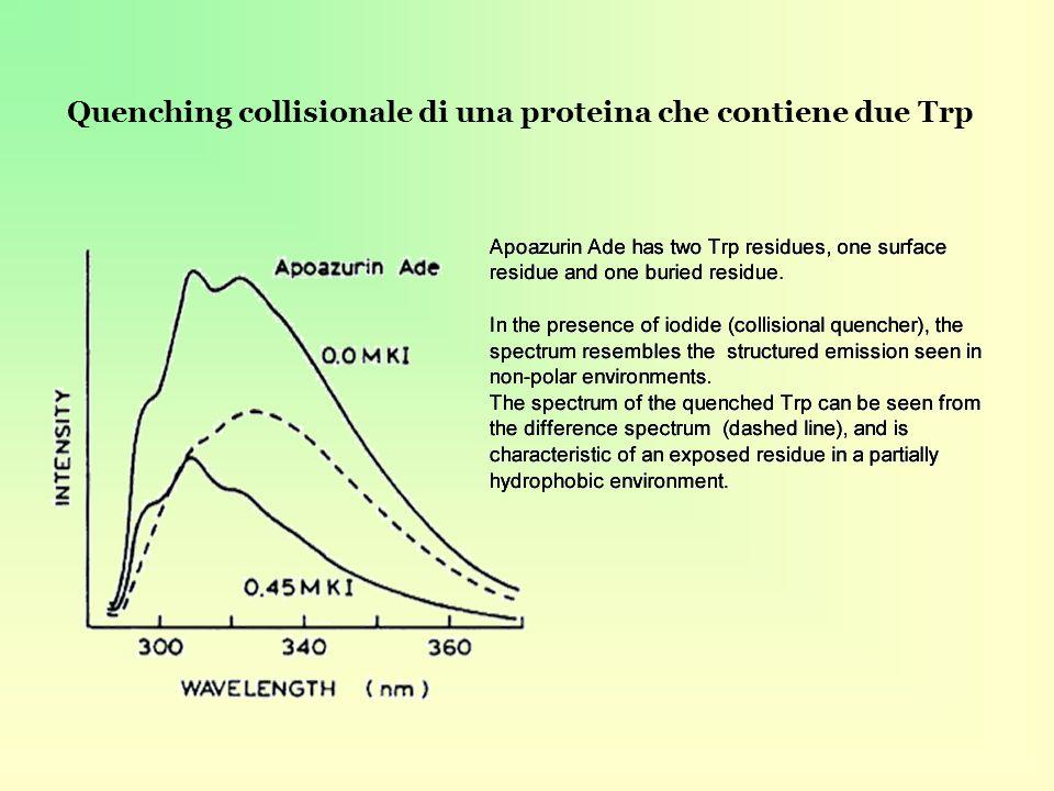 Quenching collisionale di una proteina che contiene due Trp