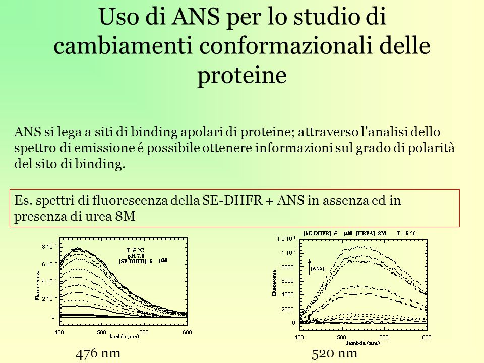 Uso di ANS per lo studio di cambiamenti conformazionali delle proteine