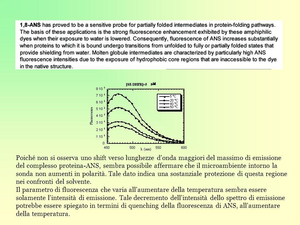 Poiché non si osserva uno shift verso lunghezze d onda maggiori del massimo di emissione del complesso proteina-ANS, sembra possibile affermare che il microambiente intorno la sonda non aumenti in polarità. Tale dato indica una sostanziale protezione di questa regione nei confronti del solvente.