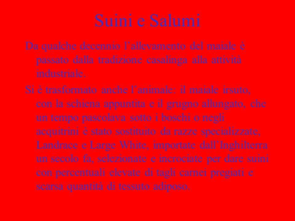 Suini e Salumi Da qualche decennio l'allevamento del maiale è passato dalla tradizione casalinga alla attività industriale.