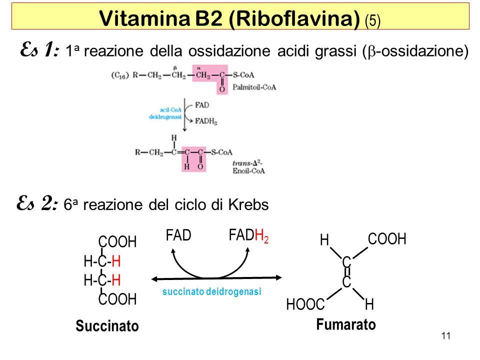 Vitamina B2 (Riboflavina) (5)
