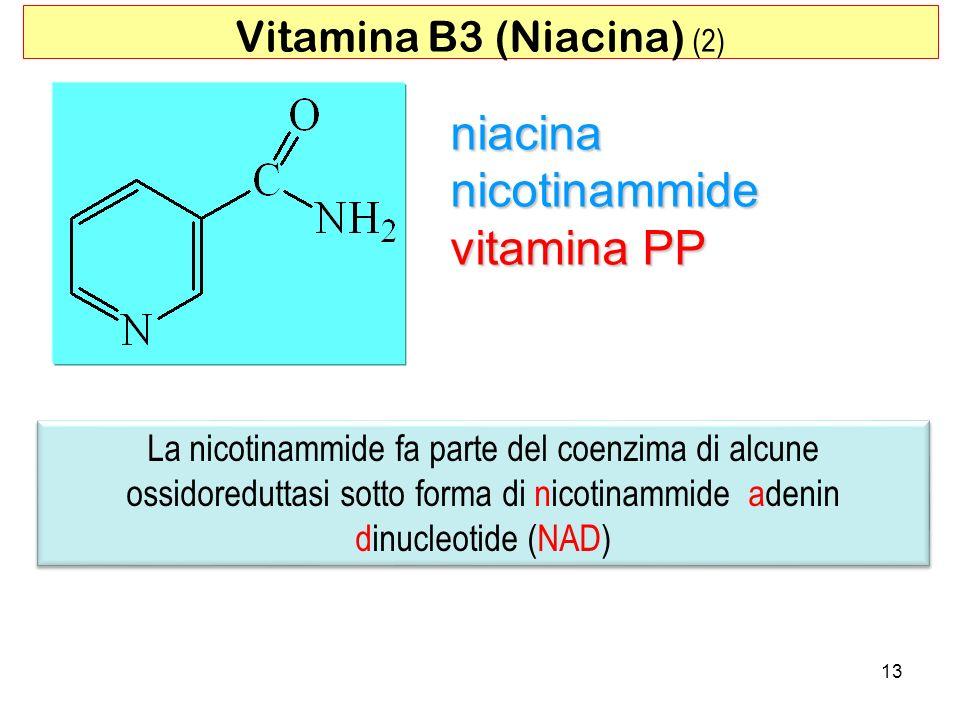 Vitamina B3 (Niacina) (2)
