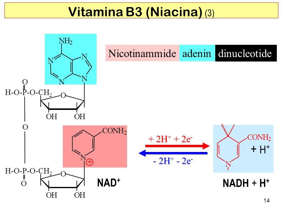 Vitamina B3 (Niacina) (3)