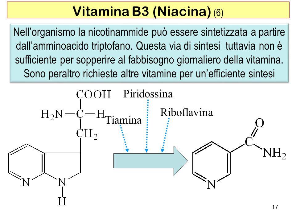 Vitamina B3 (Niacina) (6)