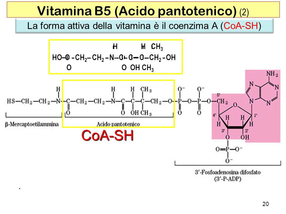 CoA-SH Vitamina B5 (Acido pantotenico) (2)
