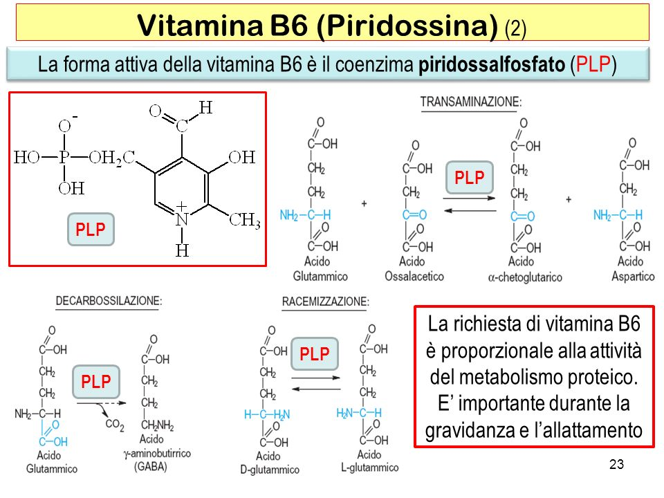Vitamina B6 (Piridossina) (2)