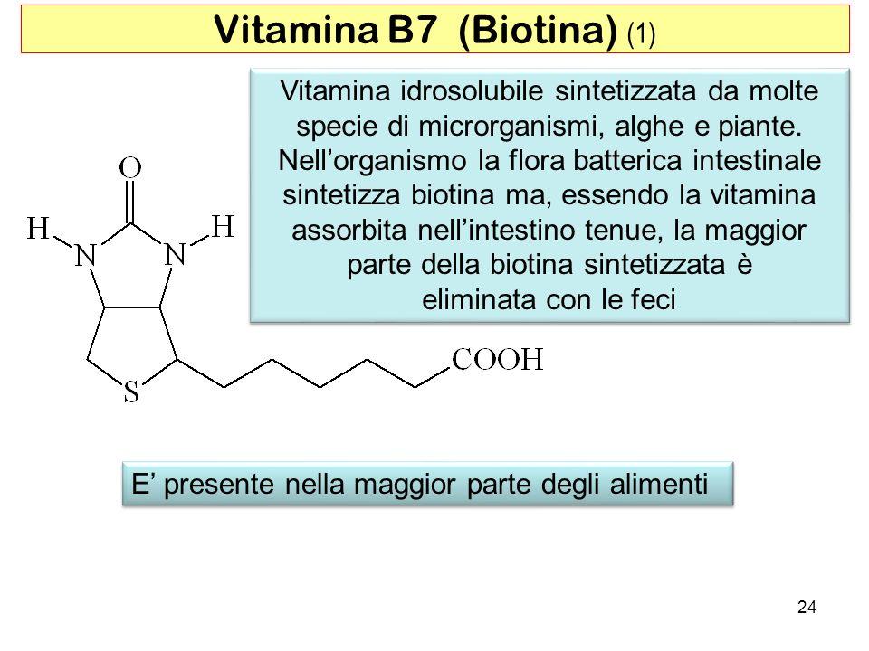 Vitamina B7 (Biotina) (1)