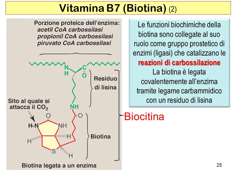 Vitamina B7 (Biotina) (2)