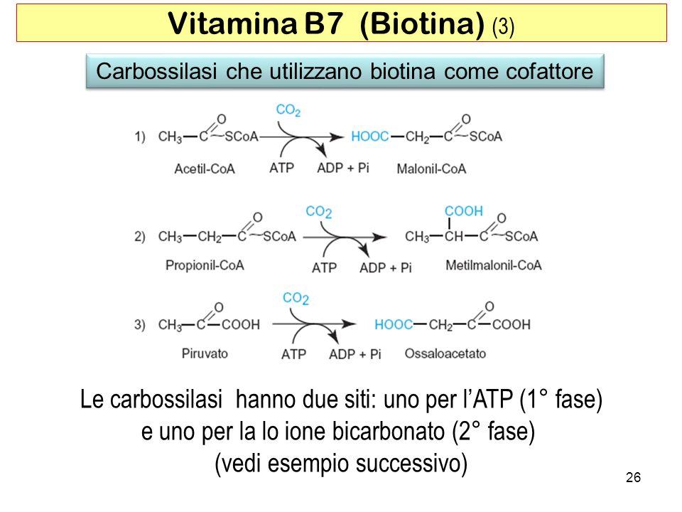 Vitamina B7 (Biotina) (3)