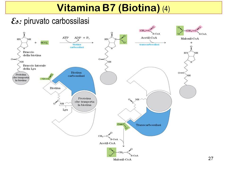Vitamina B7 (Biotina) (4)