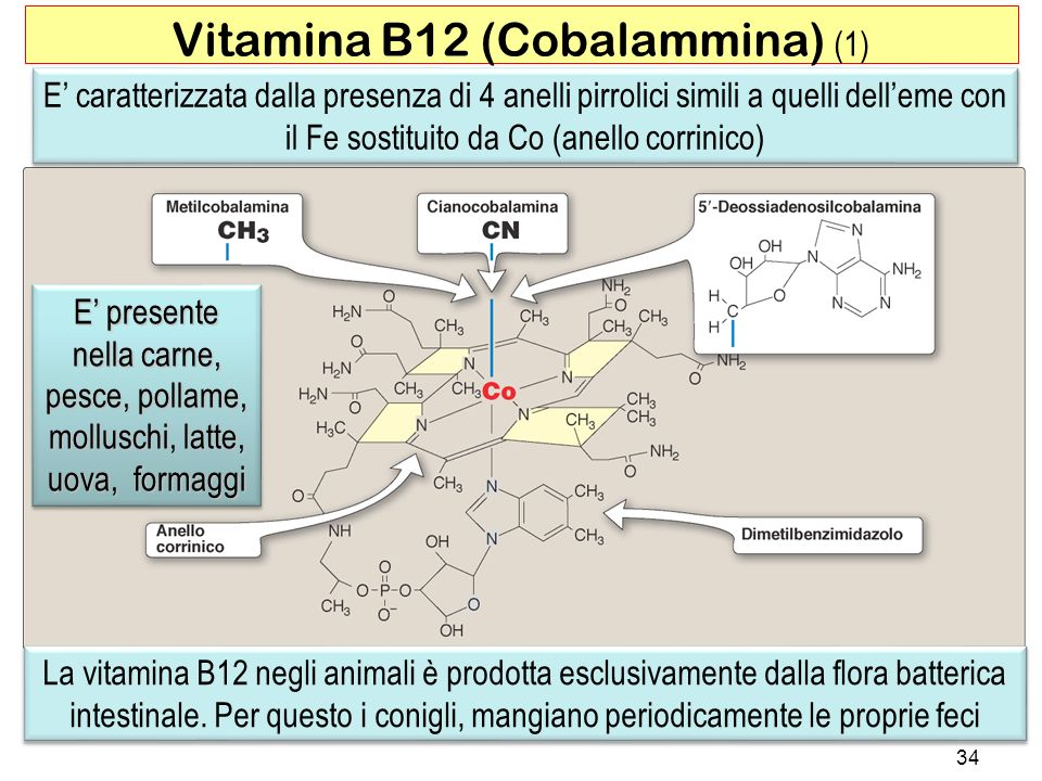 Vitamina B12 (Cobalammina) (1)