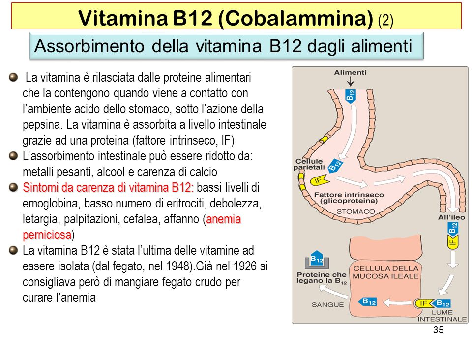 Vitamina B12 (Cobalammina) (2)