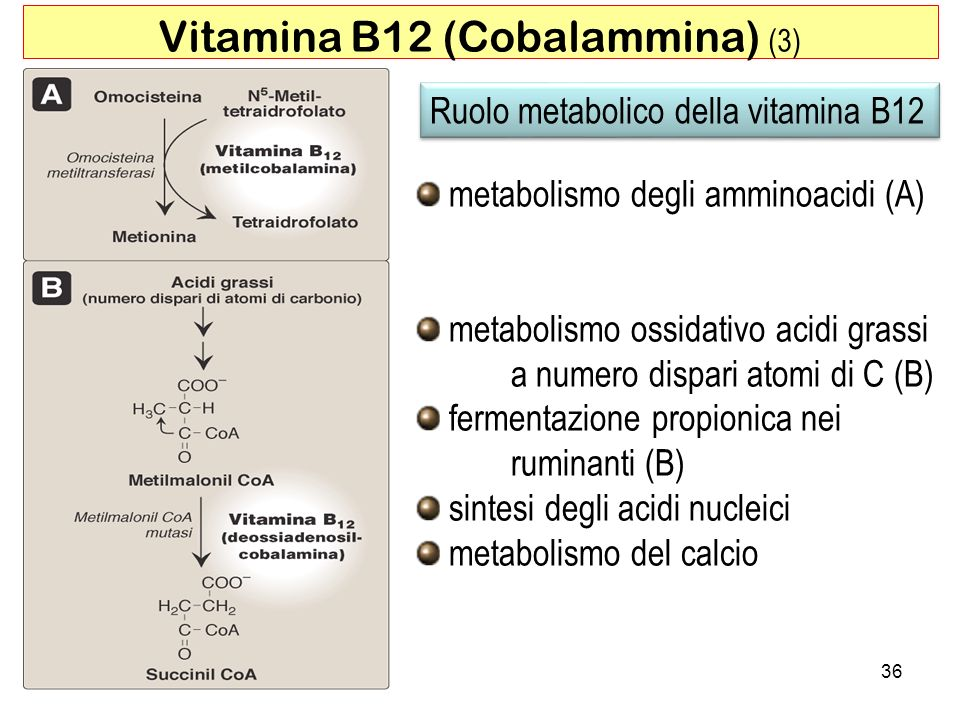 Vitamina B12 (Cobalammina) (3)