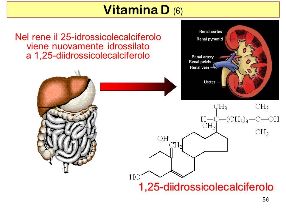 Vitamina D (6) 1,25-diidrossicolecalciferolo
