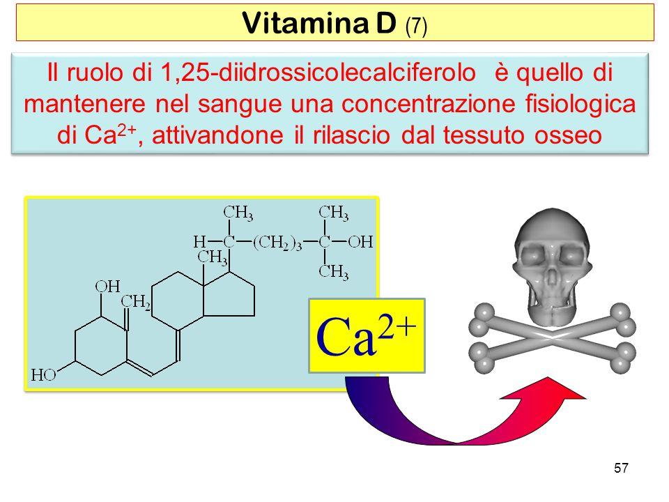 Vitamina D (7)