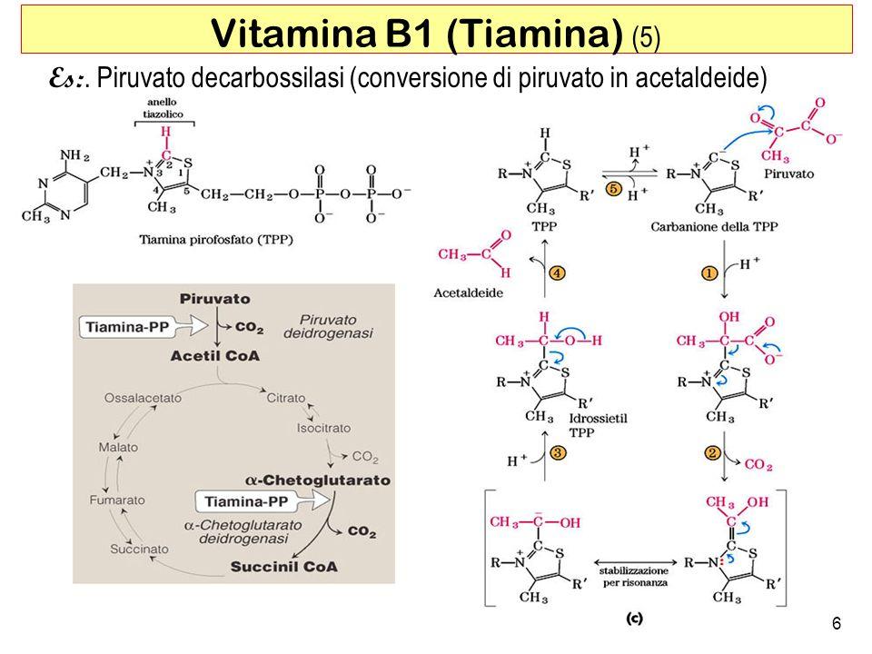 Vitamina B1 (Tiamina) (5)