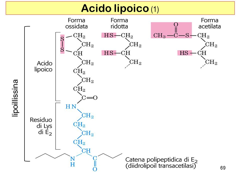 Acido lipoico (1) lipoillissina