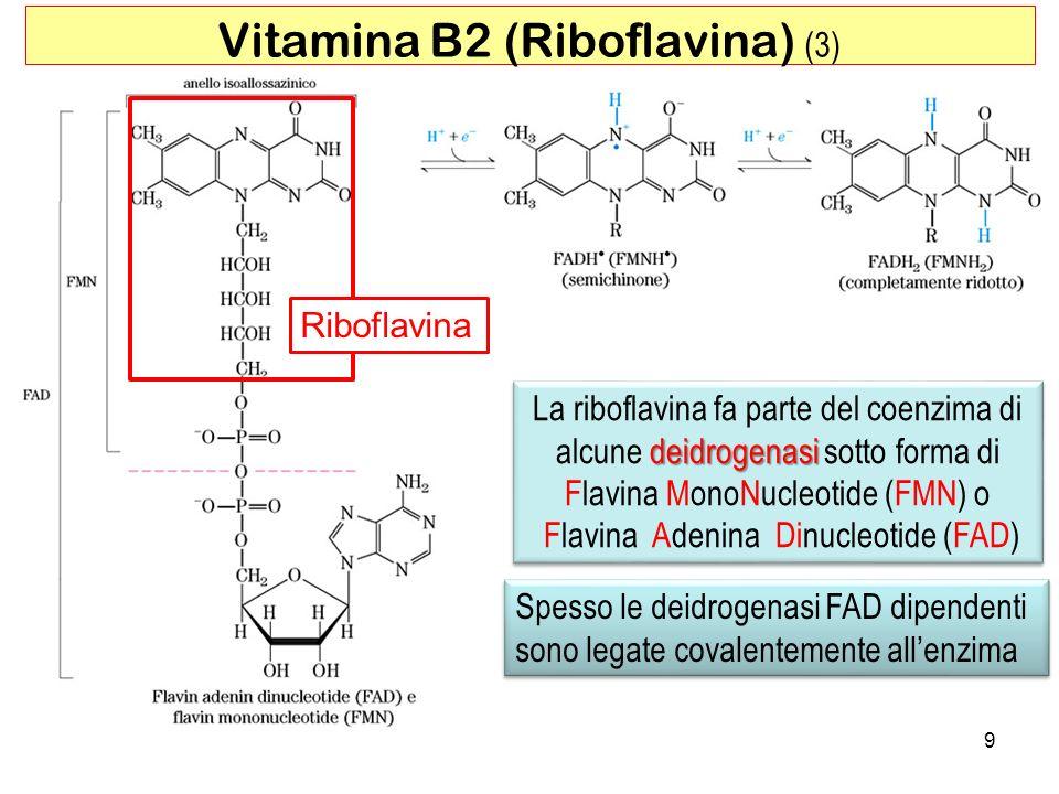 Vitamina B2 (Riboflavina) (3)