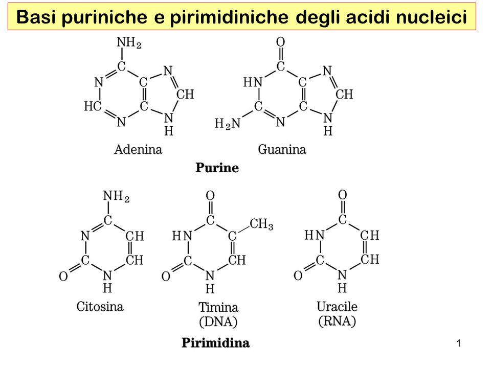 Basi puriniche e pirimidiniche degli acidi nucleici