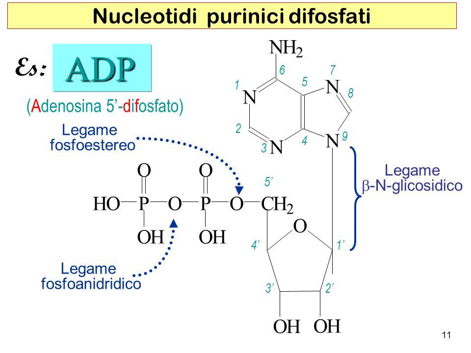 ADP Es: Nucleotidi purinici difosfati N H O C P