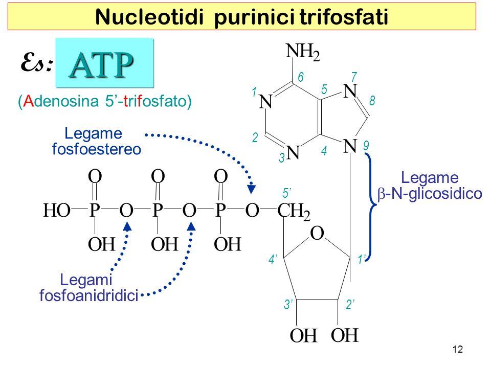 ATP Es: Nucleotidi purinici trifosfati N H O C P