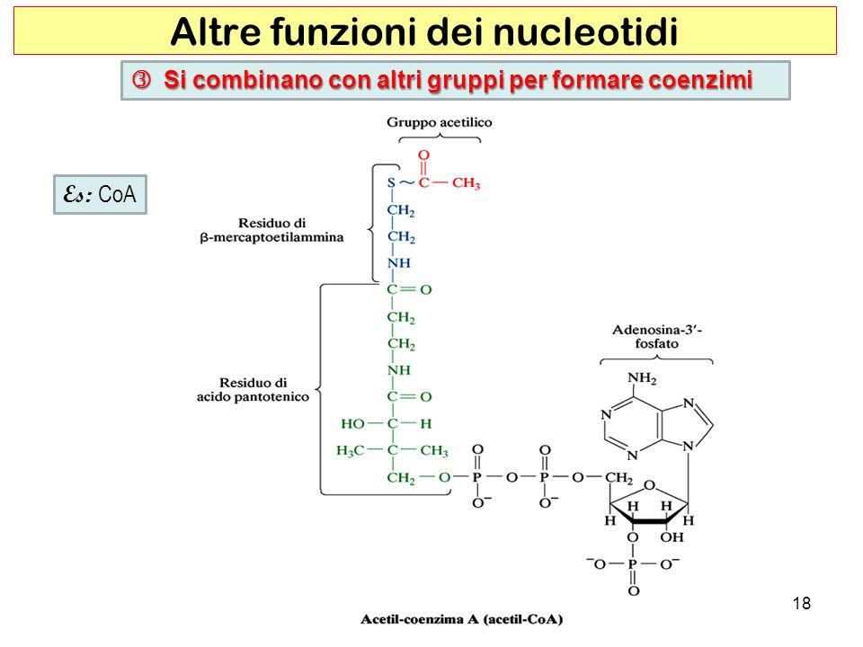 Altre funzioni dei nucleotidi