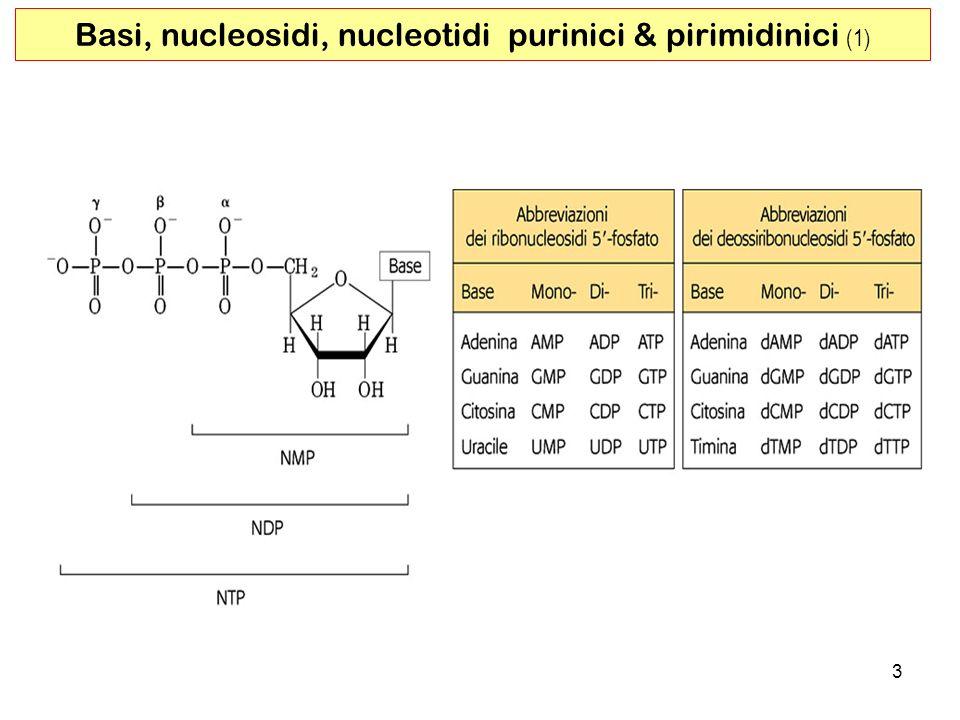 Basi, nucleosidi, nucleotidi purinici & pirimidinici (1)