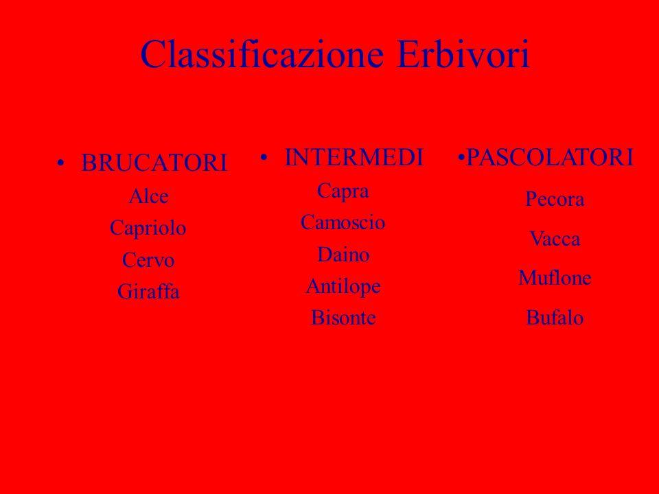 Classificazione Erbivori