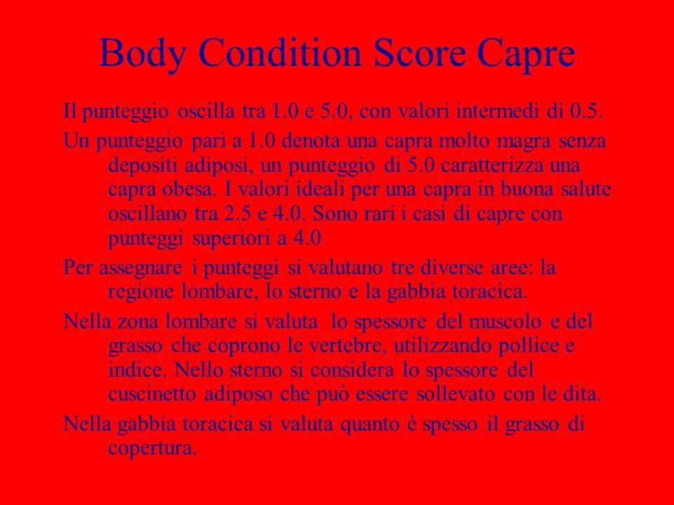 Body Condition Score Capre