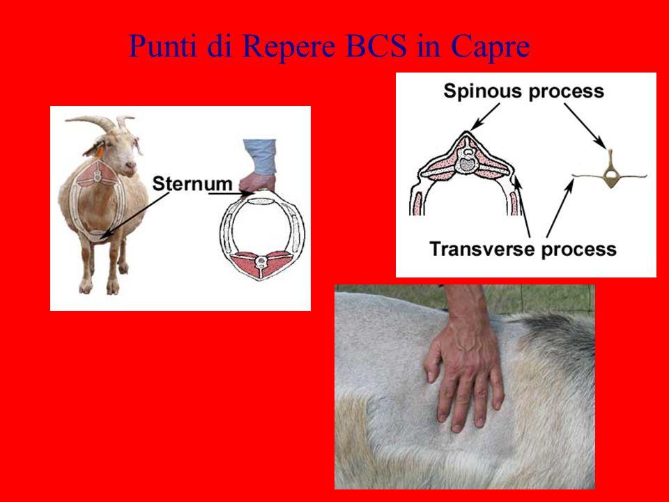 Punti di Repere BCS in Capre
