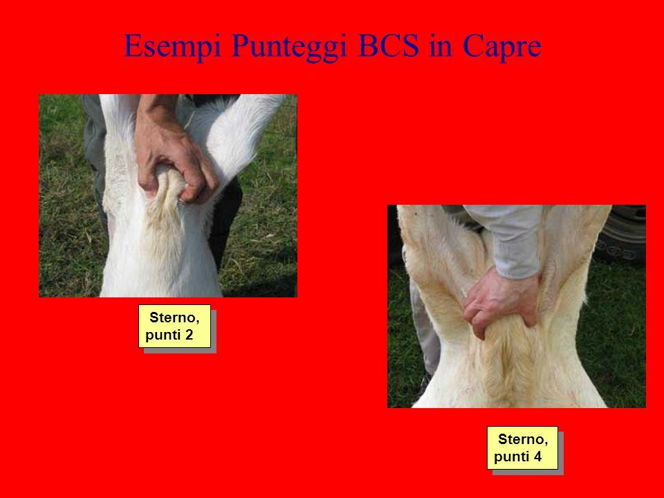 Esempi Punteggi BCS in Capre