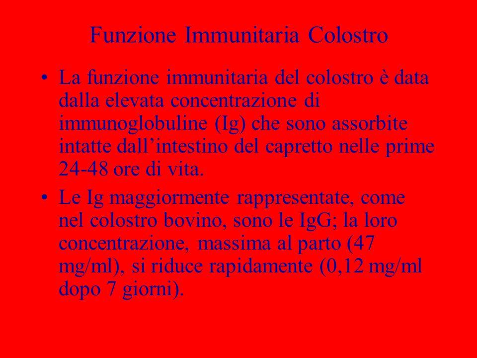 Funzione Immunitaria Colostro