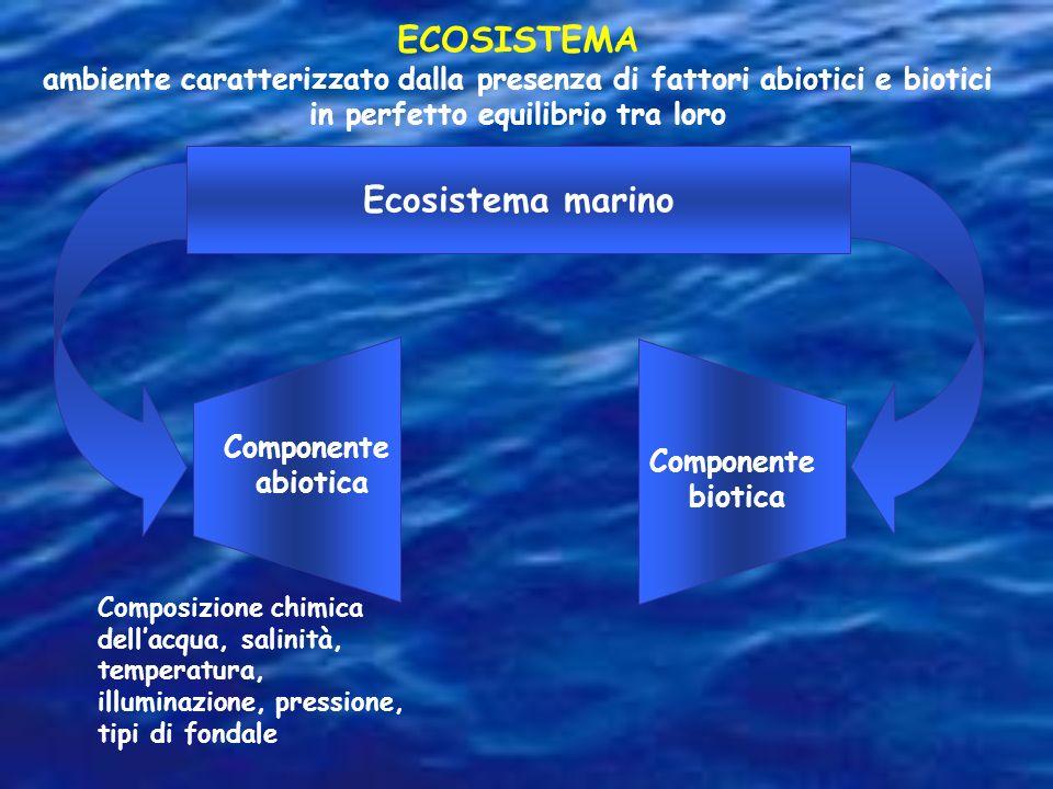 ECOSISTEMA Ecosistema marino