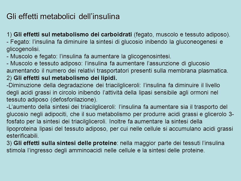 Gli effetti metabolici dell'insulina
