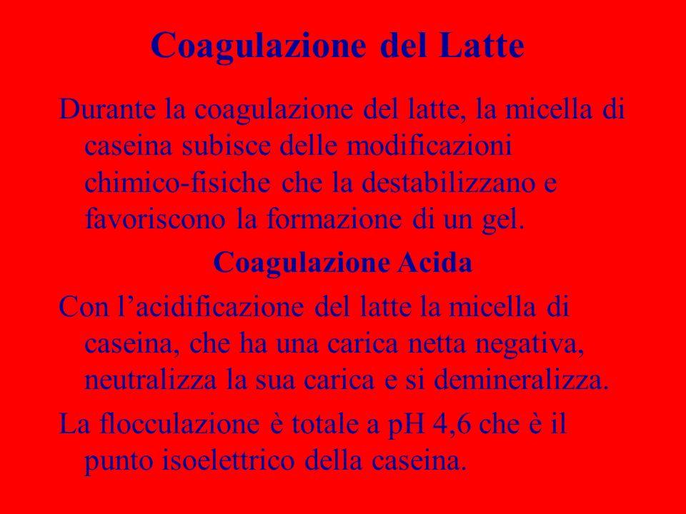 Coagulazione del Latte